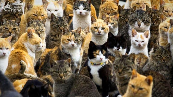 Aoshima lisola dei gatti